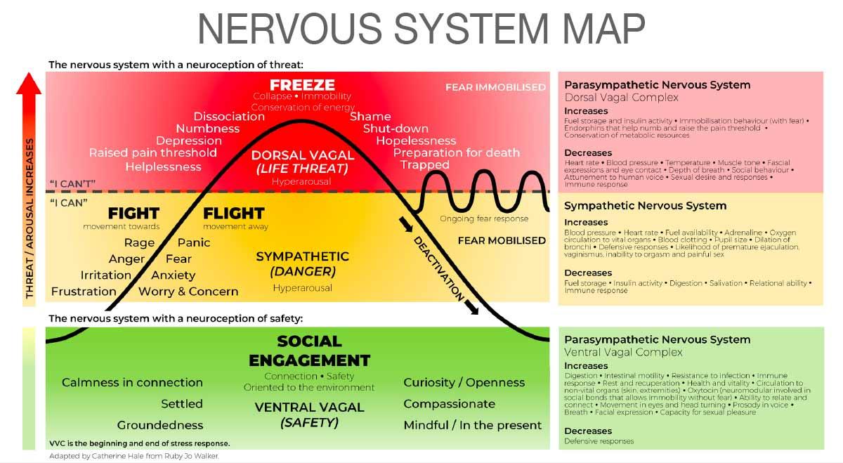 nervous system map trauma