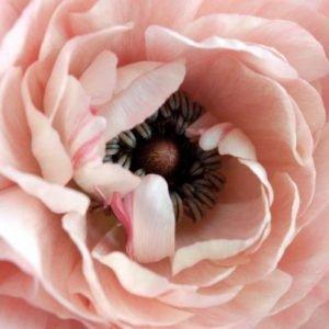 inner flower seeds